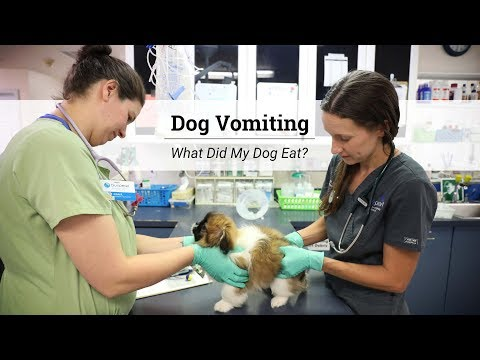 Dog Vomiting - What Did My Dog Eat?
