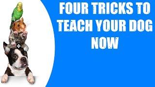 FOUR TRICKS TO TEACH YOUR DOG NOW