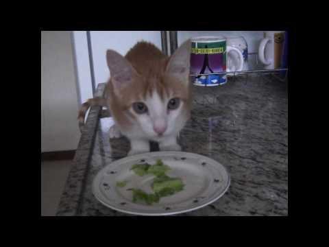 Vegan cat, part five: young Ulisses eating lettuce...