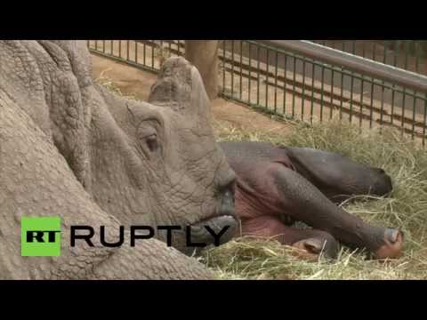 Germany: Meet the baby Indian rhino at Berlin's Tierpark