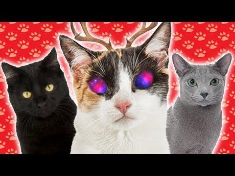 ALIEN CAT | What Cat Breed am I?