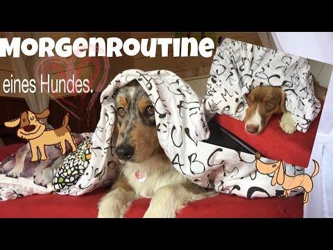 Guten Morgen Deutschland Morgenroutine Eines Hundes