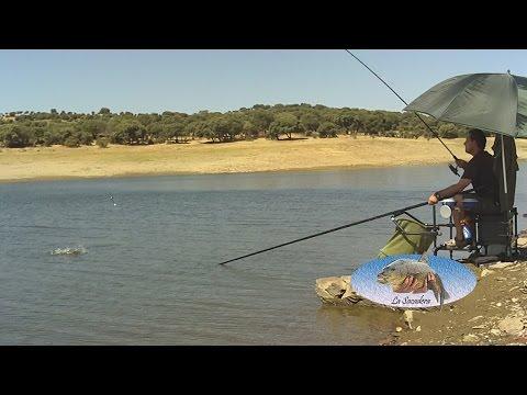 Como pescar a la Inglesa (Para Principiantes)
