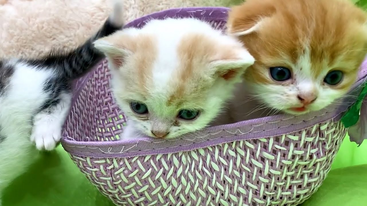 """It's time to get out of here!"" - Hat with tiny kittens"