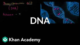DNA | Biomolecules | MCAT | Khan Academy
