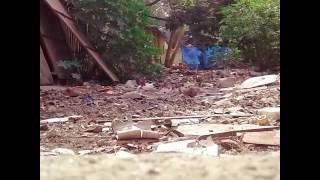 Dog sex  hindi oudio full movie pron