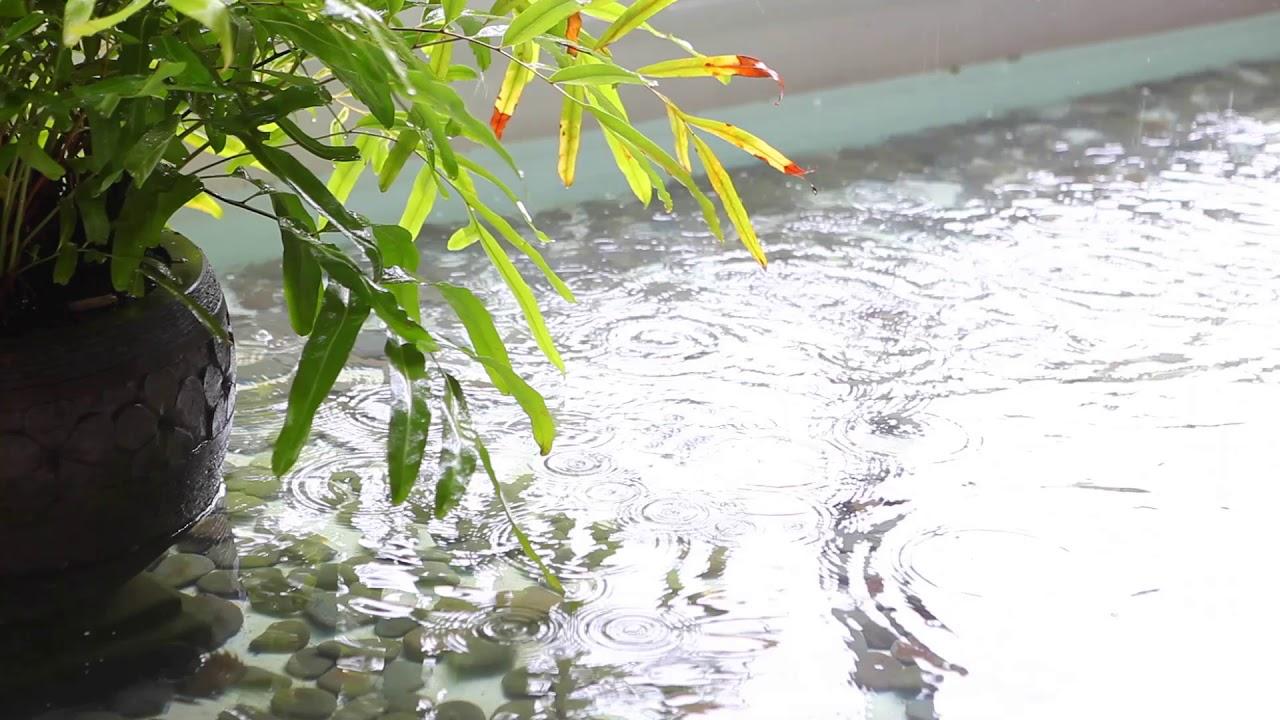 雨の音 ~ 熱帯雨林の植木鉢の緑の植物 - 【2時間】