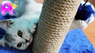 Cats are just the funniest pets ever - Masya and scratching