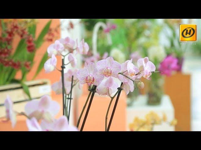 Наше утро: сюжет о коллекции орхидей.
