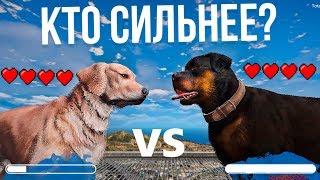 Собака ФРАНКЛИНА ЧОП VS Собака МАЙКЛА [Кто сильнее в GTAV?] CHOP VS DOGS MICHAEL