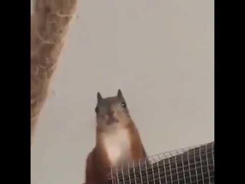 Squirrel Has Heavenly Voice