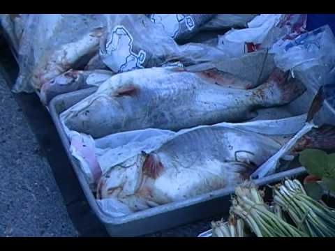 Vietnamese Farmers' Market in Michoud, New Orleans Travel Video