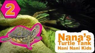 Inside the Turtle Tank 2 - Nani Nani Kids