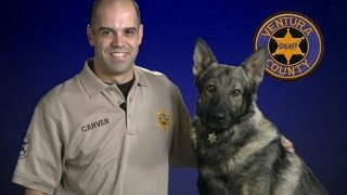 Ventura County Sheriff's K-9 Unit (psa)