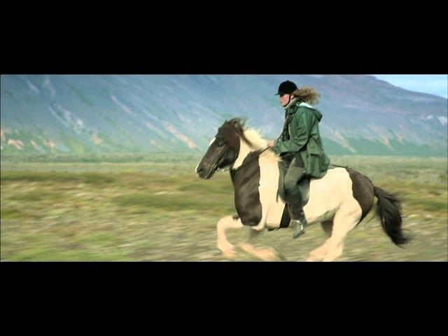 アイスランドを舞台に人と馬の暮らしを見つめたドラマ!映画『馬々と人間たち』予告編