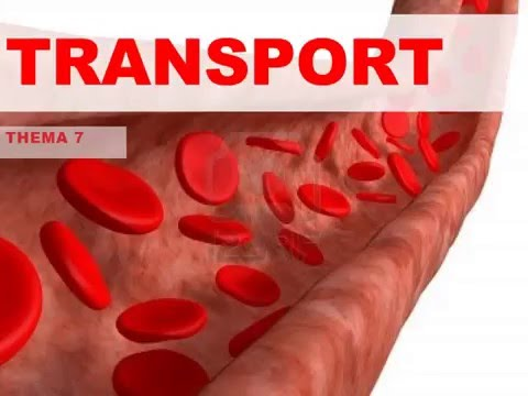Hoofdstuk Transport, bloedvatenstelsel