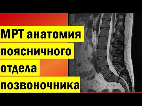 Строение и функции позвоночника Позвоночник лечение