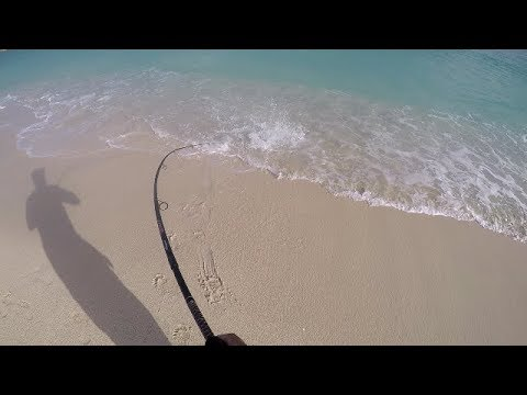 BEST FISH I HAVE EVER CAUGHT ON THE BEACH! Surf Fishing the Caribbean