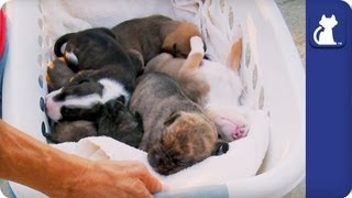 Repeat youtube video The Litter with Sharon Osbourne - Episode 1