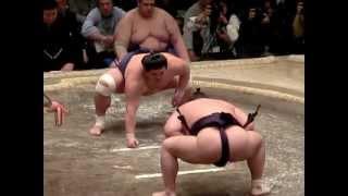 大相撲一月場所千秋楽。 勝ち越しがかかった千秋楽。 そんな妙義龍と碧...