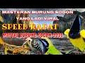 Masteran Burung Sogon Yang Lagi Viral Materi Burung Sogon   Mp3 - Mp4 Download