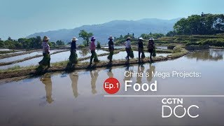 China's Mega Projects: Food