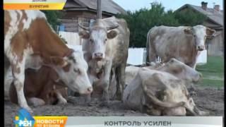 Грозит ли сибирская язва Иркутской области