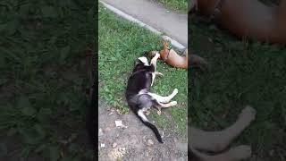 Собаки кусаки