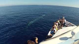 Baixar Vivi l'emozione con Whalewatch Genova - Liguria