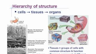 Animal Phyla Characteristics Part 1