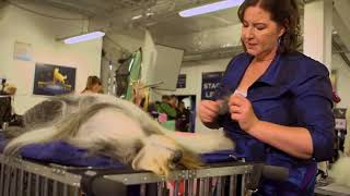 Show Dogs Behind the Scenes of Comedy Movie (2018)