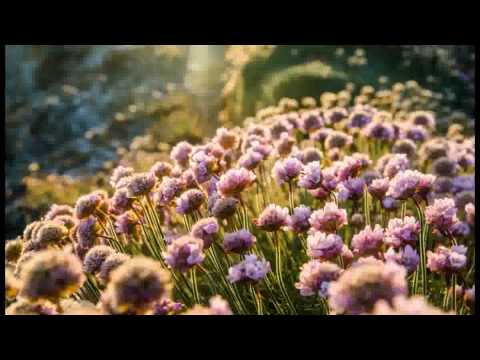 Bunga-Bunga Cinta (Versi Lelaki) - Misha Omar