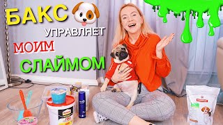 МОЯ СОБАКА УПРАВЛЯЕТ МОИМ СЛАЙМОМ  🐶 MY DOG PICKS MY SLIME INGREDIENTS 💜 БАКС ЗУМ ДЕЛАТ ЛИЗУН