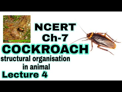 COCKROACH - Structural Organisation in Animals (Biology) Class 11 Lecture 4 for NEET/AIIMS thumbnail