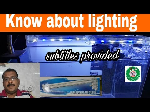 How To Choose Fish Tank Light?