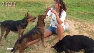 Woww Amazing 2018 Beautiful Girl Playing With Dog Smart & Funny Dog#  11