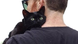 Black cat spends 6 months at shelter then he jumps on a random man's lap and won't move