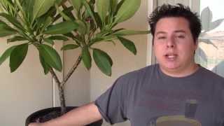 How To Take Plumeria Cuttings