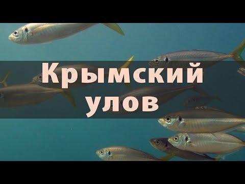 Рыбное хозяйство Крыма