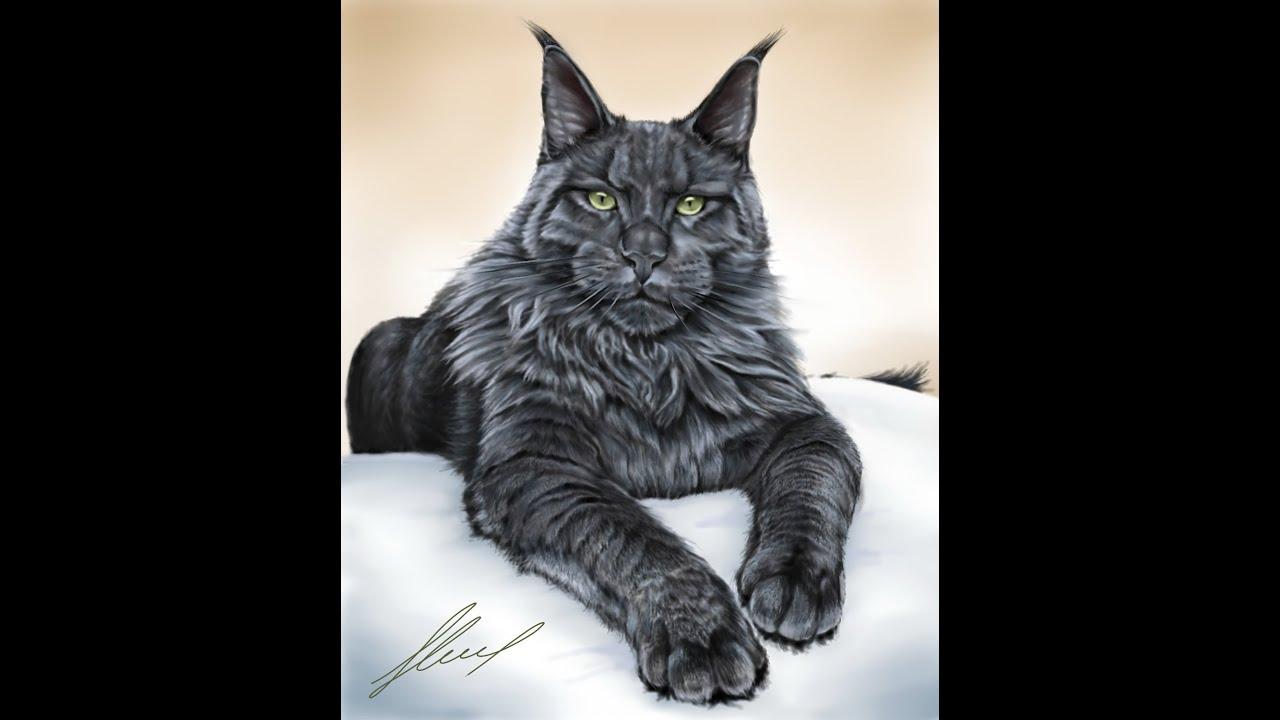 Мейн кун и обычный кот - YouTube