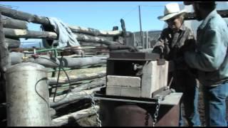 Cattle Branding Day in Western Colorado