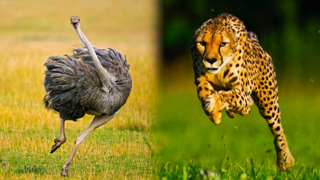 Top Ridiculously Fast Animals YouTube - 25 intelligent animals world