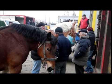 Skaryszew 2015 - dramat polskich koni
