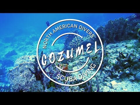 Our Dive Trips   Scuba Diving in COZUMEL 2017