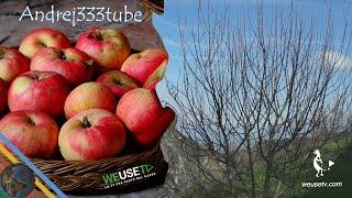 Potatura melo 2 (antica cultivar di mele) -Innesti e potature - Tecniche di innesto alberi da frutto