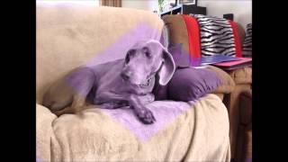 Kiera The Sooky Dog