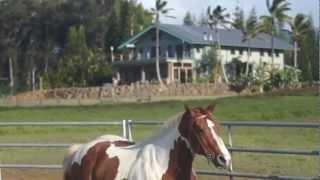 Mea Makamae Ranch, Haiku, Maui | The Maui Real Estate Team