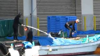 Washing away the blood - Dolphin slaughter, Taiji (11/29/10)