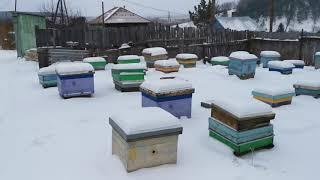 Фото Как зимуют пчелы при +6 и пару слов о новых ветеринарных правилах. Пасека Старчевских