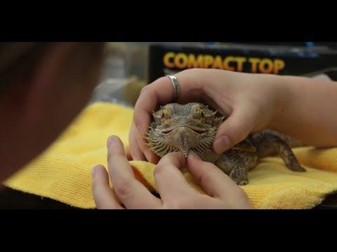 Animal Health Technology - Reptile Workshop